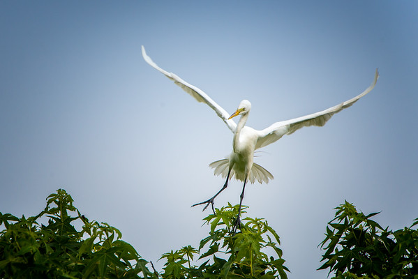 Wadmalaw Bird Rookery