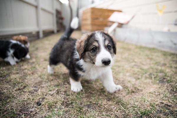 puppy #3