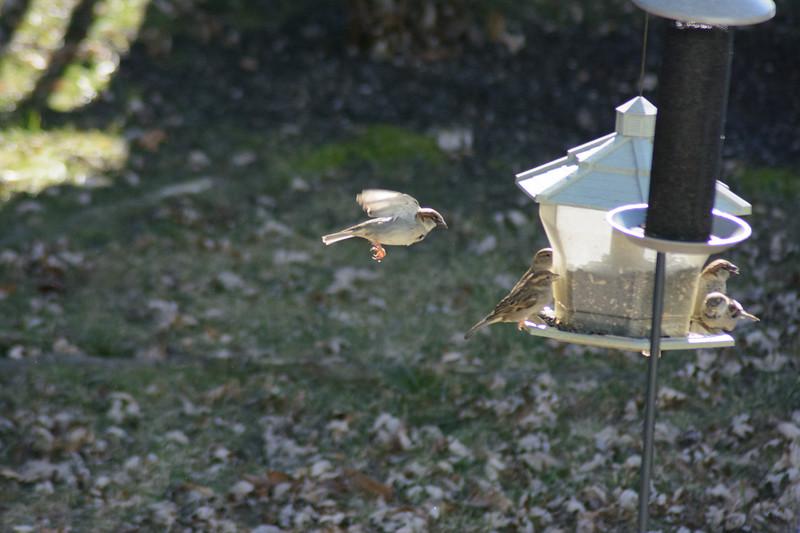Birds flying-014
