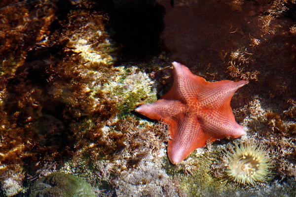 Fish-Underwater- Sea Life