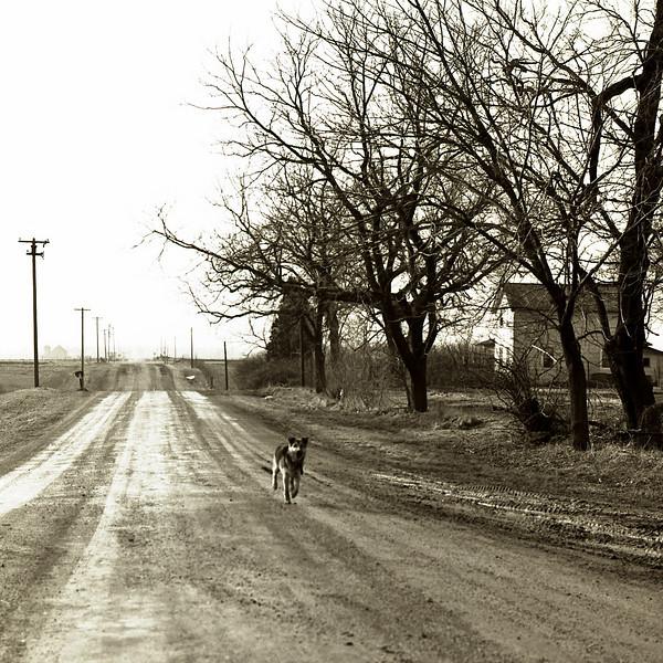 47593834_Dog on road