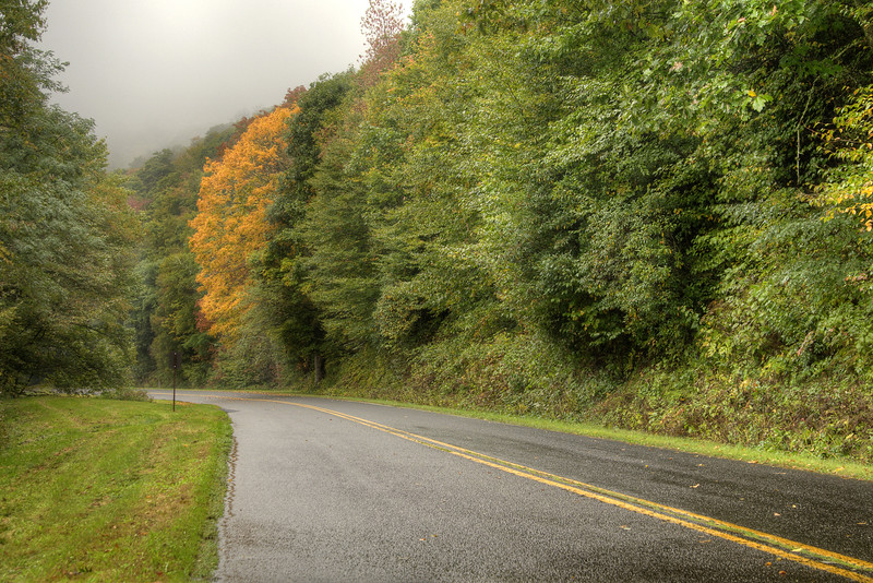 A single yellow tree stands out against the vibrant greens near Milepost 460 on the Blue Ridge Parkway in North Carolina on Monday, September 29, 2014. Copyright 2014 Jason Barnette