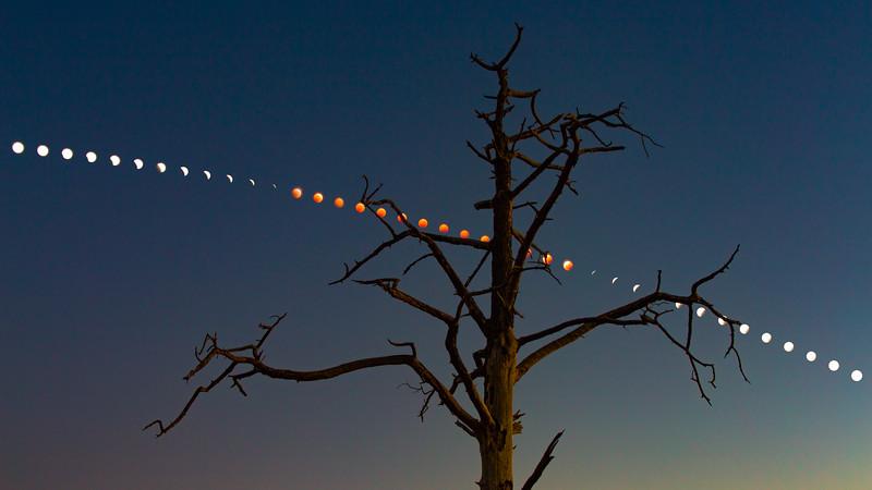 1801 Lunar Eclipse Tree Composite 35mm.jpg