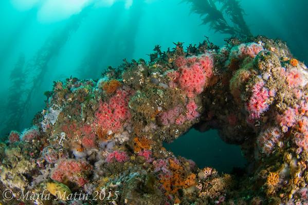 Pt. Loma Submariner July 12