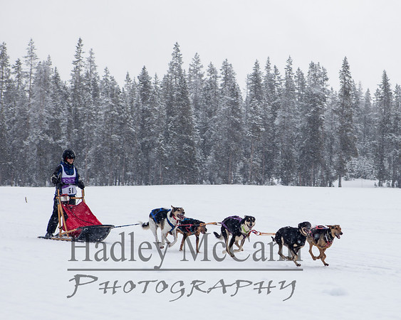 Bachelor Butte Dog Derby 2014