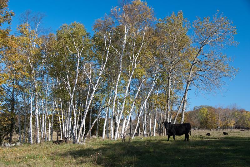 bruce_peninnsula_fall-20091018-0105.jpg