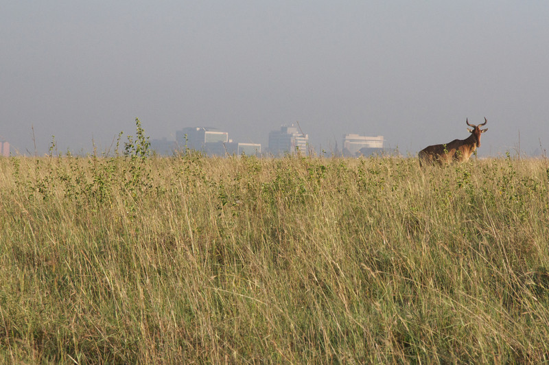 Kenya.Card1.02.2014 529