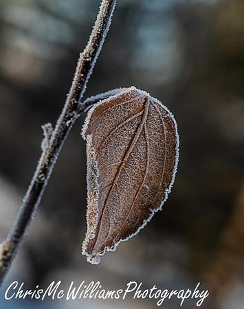 Hoar Frost 12 20
