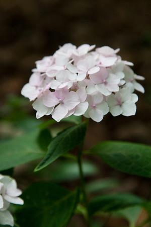 random flowers 2011