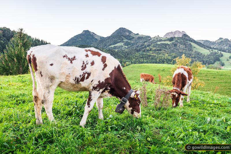 Gruyères Dairy