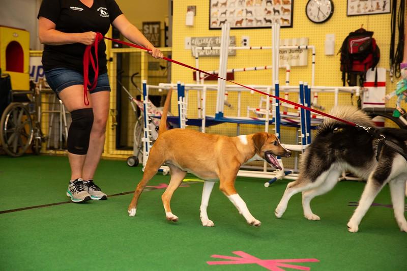 on Command dog Training June 2019-5172.jpg