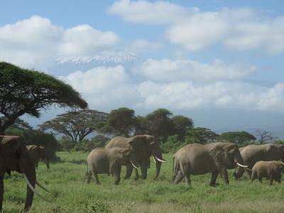 Tanzania and Kenya 2020