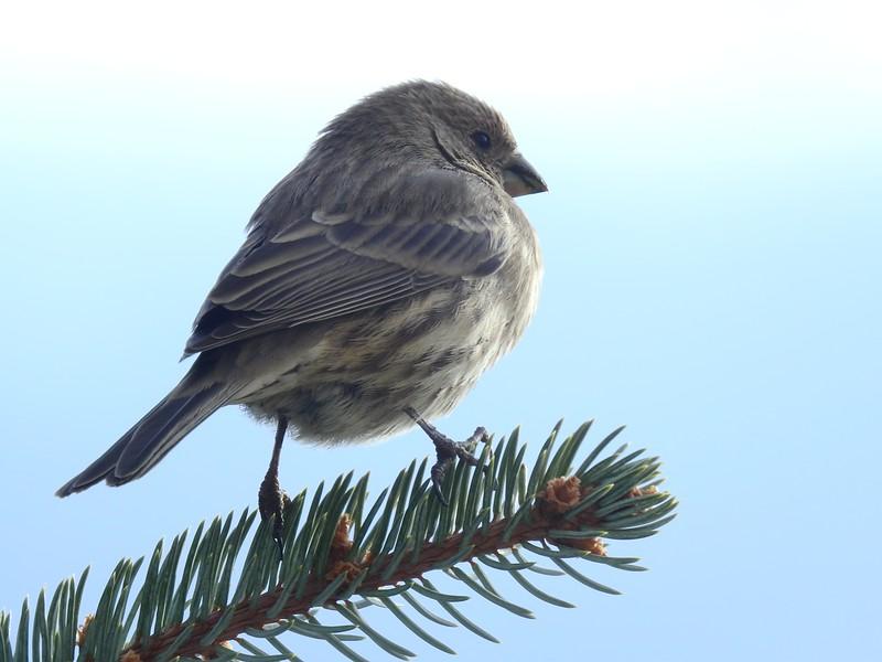 birds (140).JPG