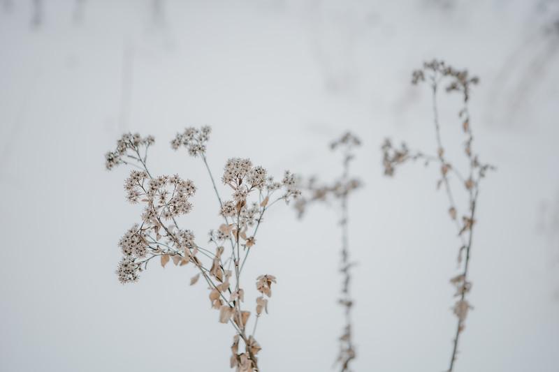 AVS_EcoPreserve_Winter2021-12.jpg