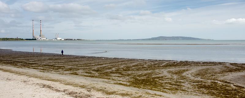 Walking the dog on Sandymount Strand