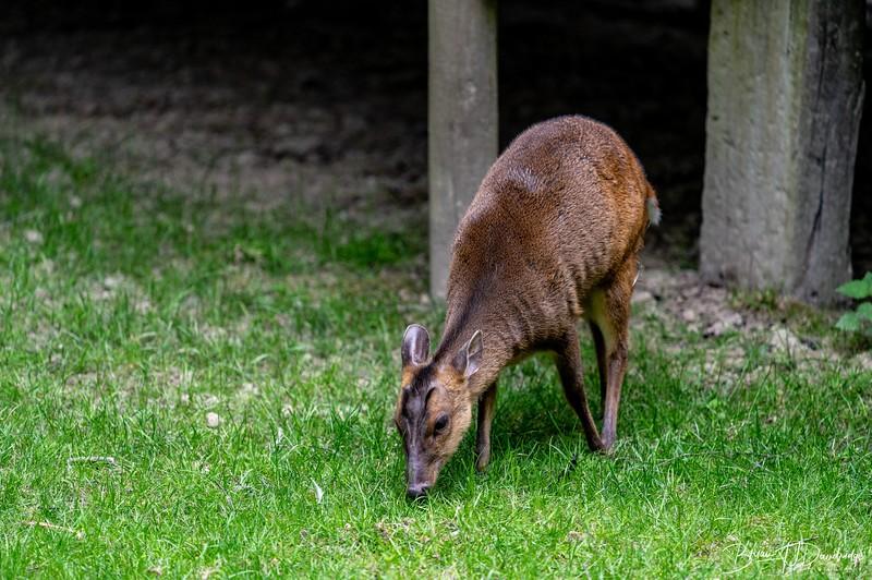 British Wildlife Centre_Z6-7344.jpg