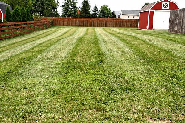 Yard - July 26, 2014