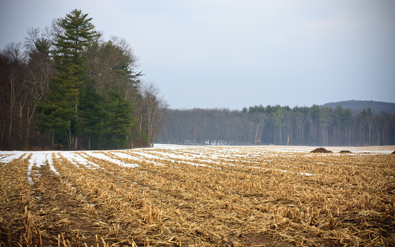 Hay field in late winter near the Ashokan Reservoir