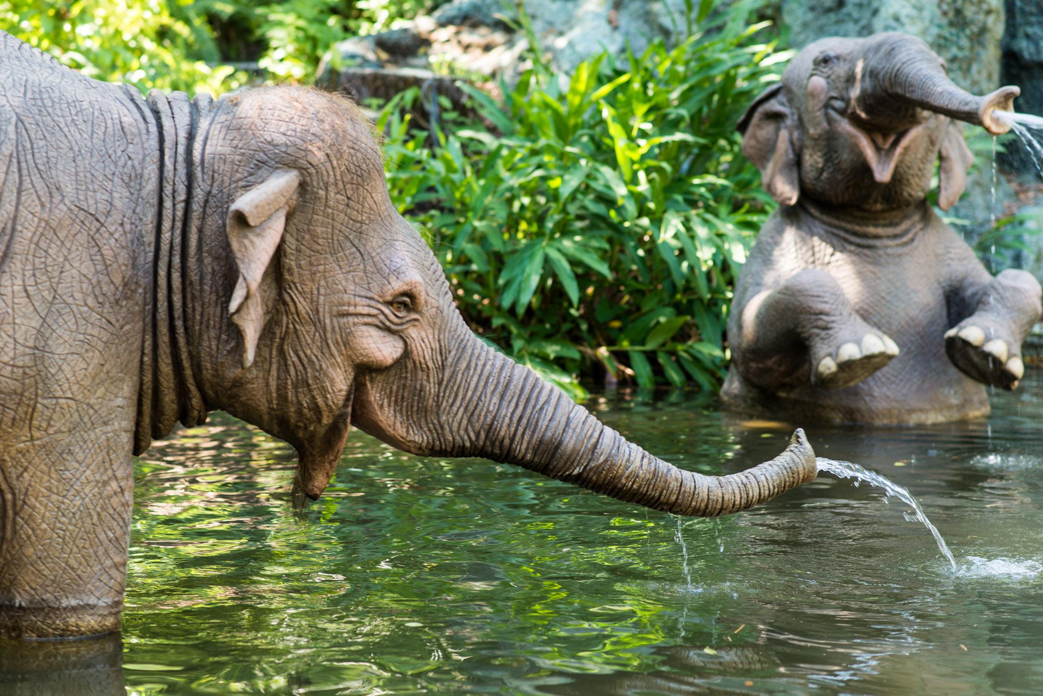Jungle Cruise Elephants - Walt Disney World Magic Kingdom