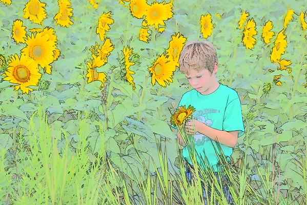 Aiden Sunflower
