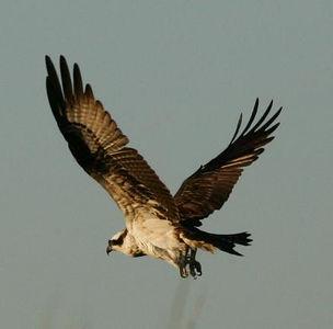 All kinds of coastal shore birds