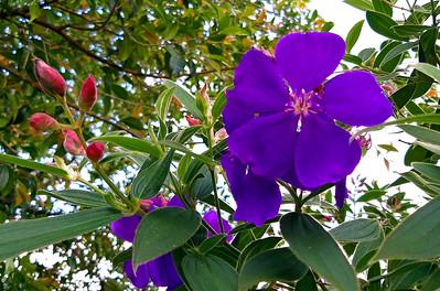 Heredia Flowers