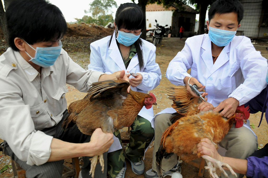 . Technical staff from the animal disease prevention and control center inject chickens with the H5N1 bird flu vaccine in Shangsi county, Guangxi Zhuang autonomous region, April 3, 2013. A total of 10 people in China have been confirmed to have contracted H7N9, all in the east of the country. The latest was a 64-year-old man from Huzhou in the eastern province of Zhejiang, who state media said on Thursday was admitted to hospital on March 31. Picture taken April 3, 2013. REUTERS/China Daily