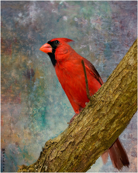 Cardinal On Waterpaper