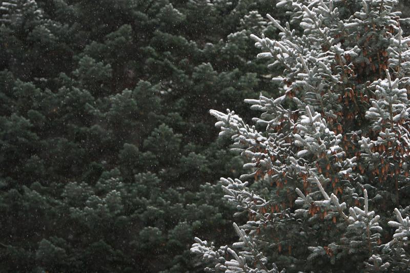 Nature  2472.jpg