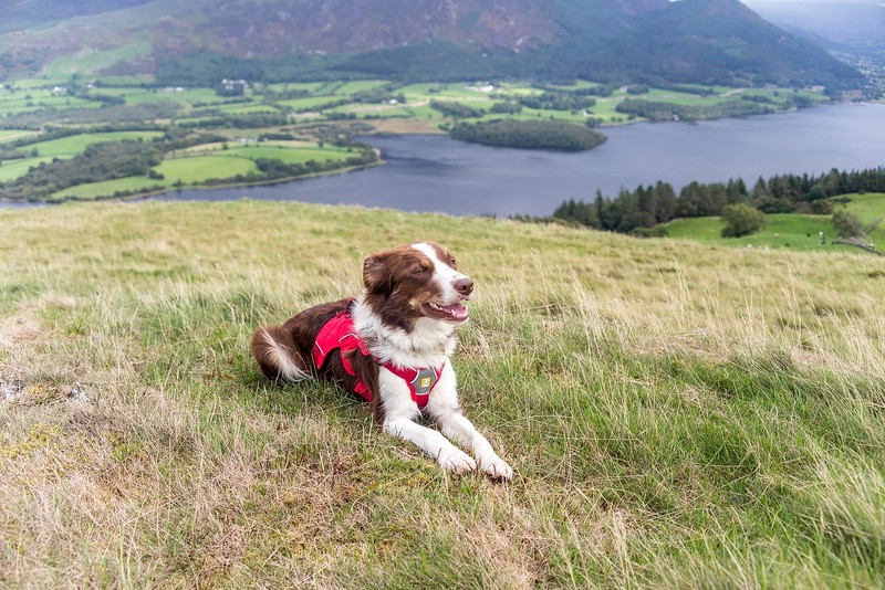 Fri 7th Sep : Sale Fell : Katie At The Viewpoint Bench
