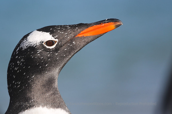 Patagonia & the Falkland Islands
