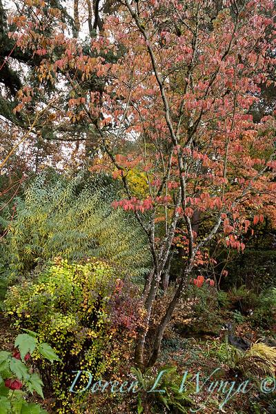 Dietrick fall garden_2056.jpg