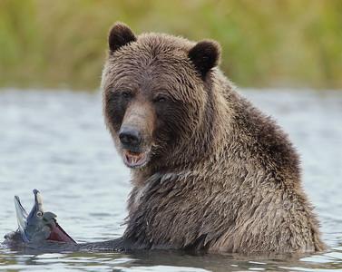 Chilko Lake bear trip