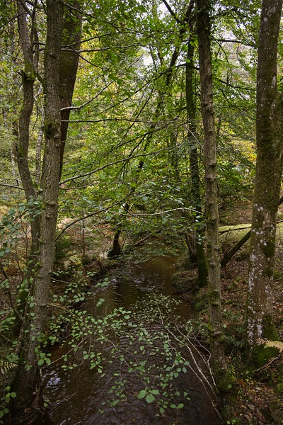 New Forest Oct 2019  004On1.jpg