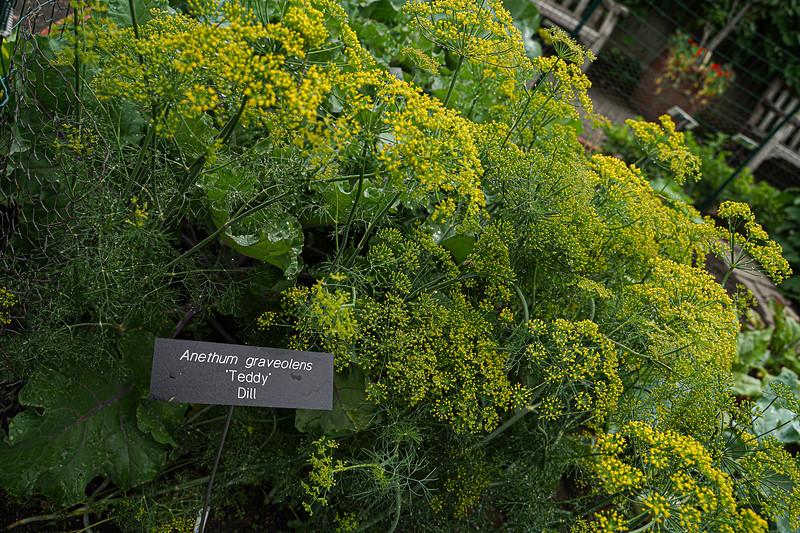 Arboretum, July Harvest-45.JPG