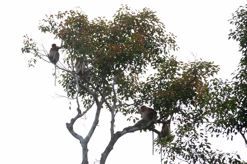 Borneo-jungle-7011.jpg
