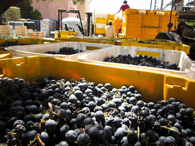 Cafayate 201203 El Porvenir Wine (10b).jpg