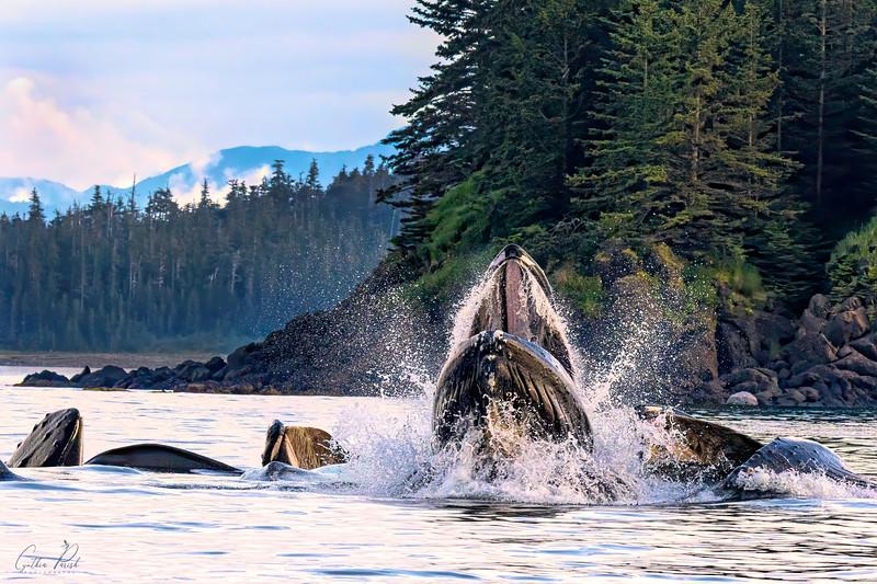 Whales_Juneau Alaska_sky corrected 664A7220.jpg
