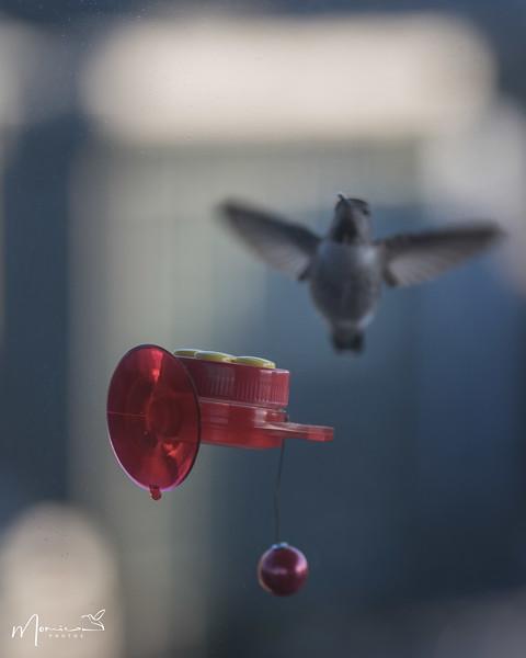 2021 - The Hummingbird Chronicles-0485_edit-2.jpg