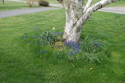 2013 Spring Flowers