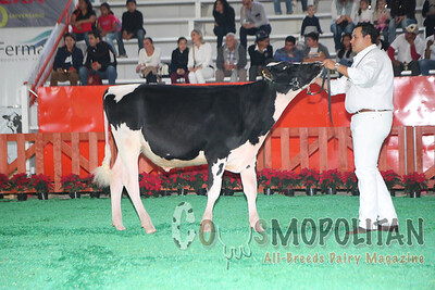Mexico Natl Holstein Hfrs & Bull