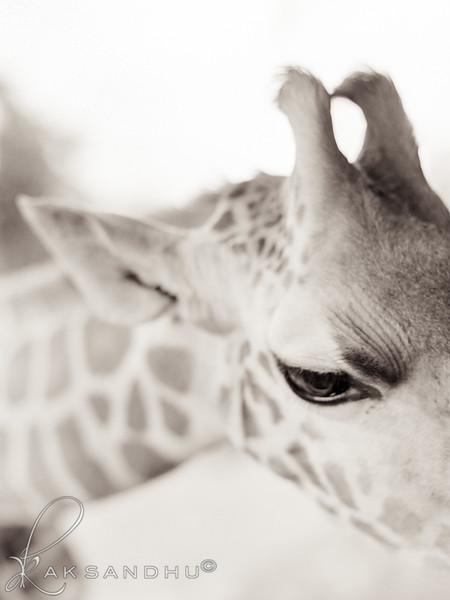 Safari-Africans-128.jpg