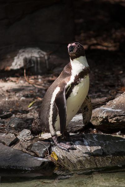 penguin-2.jpg