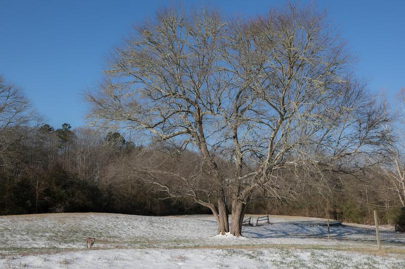 January Snow-10.jpg