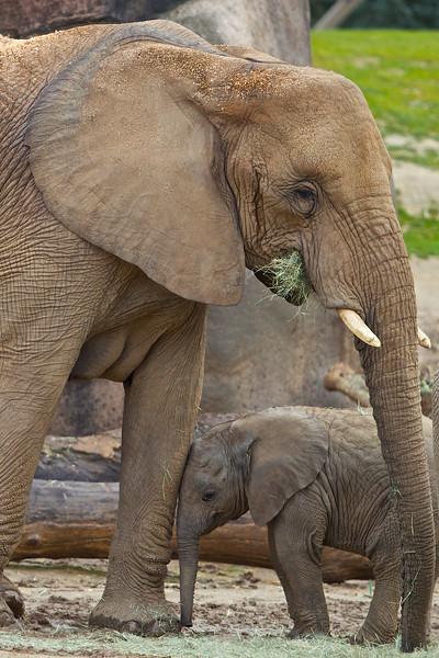 01-26-13 San Diego Wld Animal Park