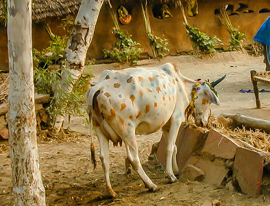 Animals India