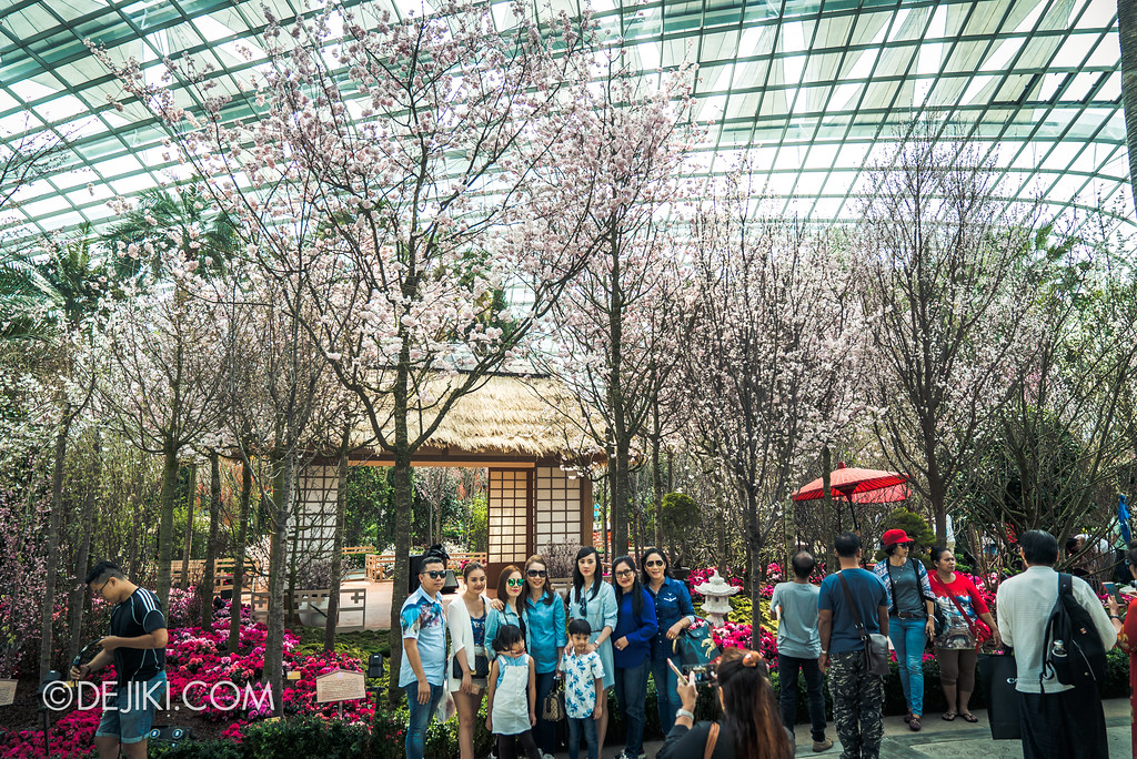 Gardens by the Bay - Sakura Matsuri 2018 floral display - Sakura grande overview