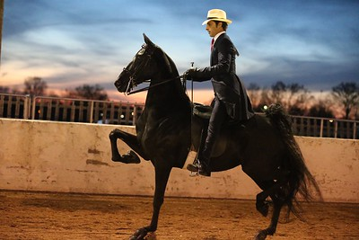 20. Three Gaited - Novice