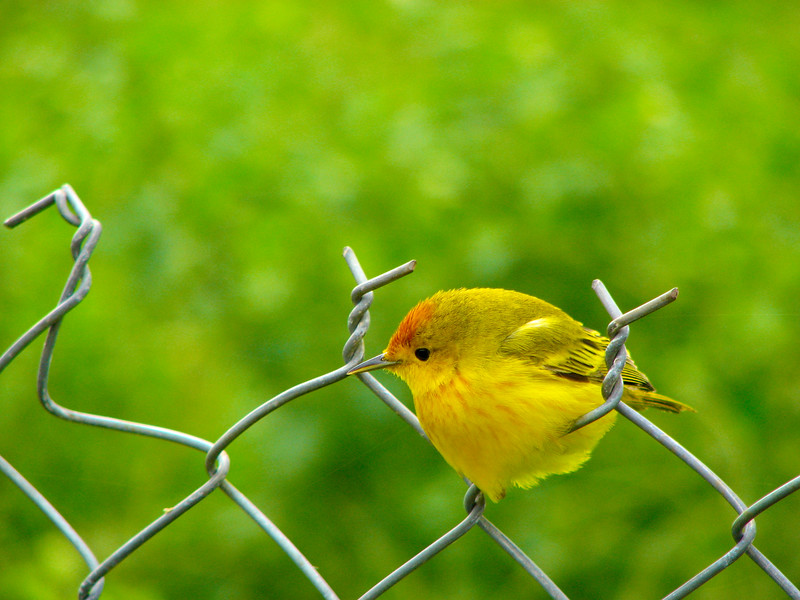Bird on the Fence