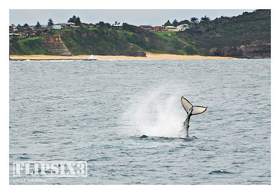 Sydney - Whale Watching